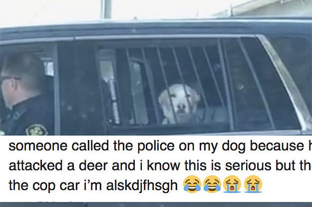 This Dog Got Detained For Chasing A Deer And His Reaction Is Everything