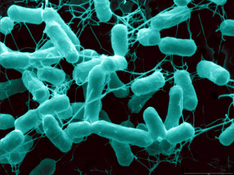 Salmonella typically causes diarrhea, abdominal cramps, and a fever. Most people will recover without treatment — but those with weak immune systems are at higher risk for complications or death from salmonella infections.