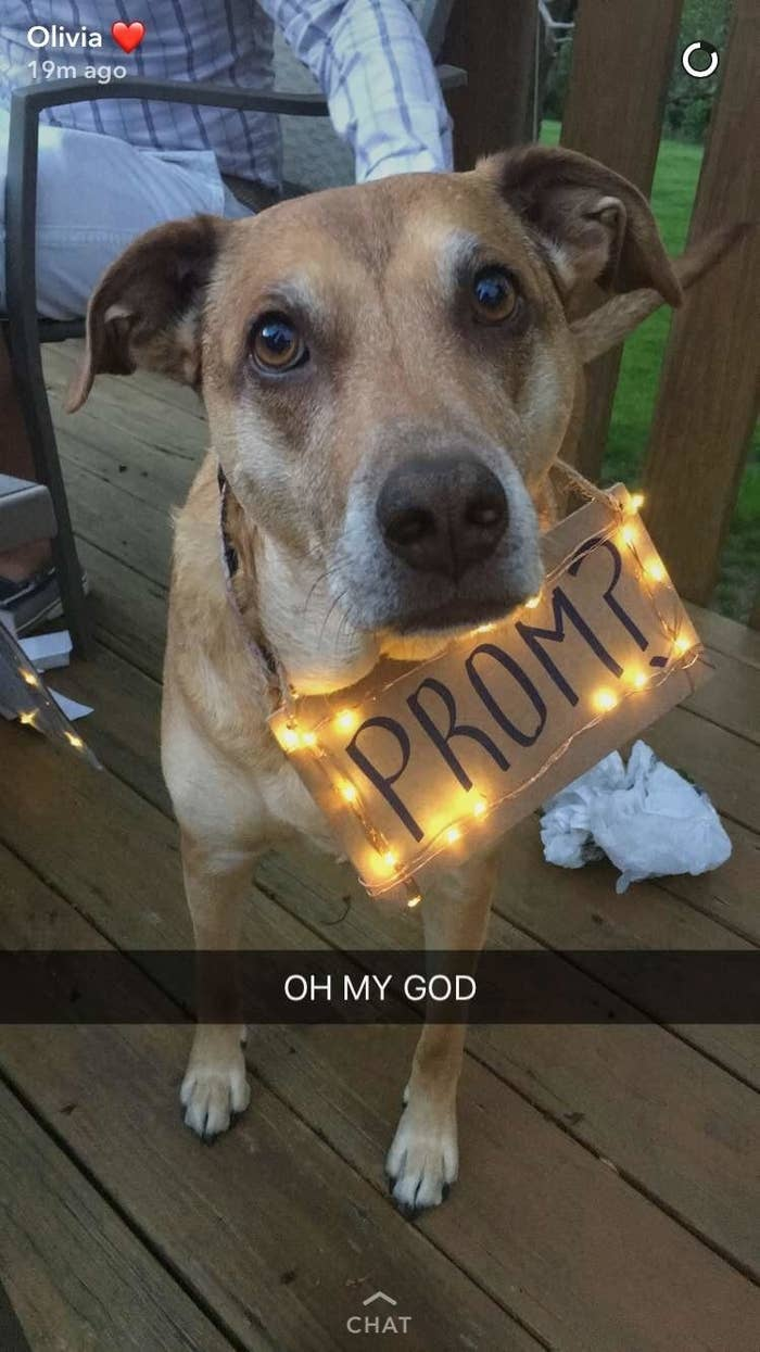 If You Didnt Know Dog Promposals Were A Thing You Do Now