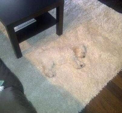 19 Pictures That Are 100000% Definitely NOT Of Dogs
