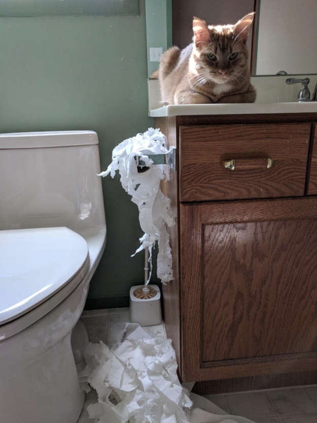 This cat who was purposefully locked in a bathroom and sought revenge:
