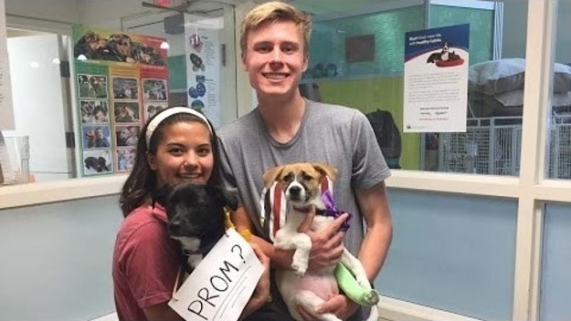 ZOMG he frickin' took her to an ANIMAL SHELTER and promposed with RESCUE PUPPIES. I AM NOT FINE.