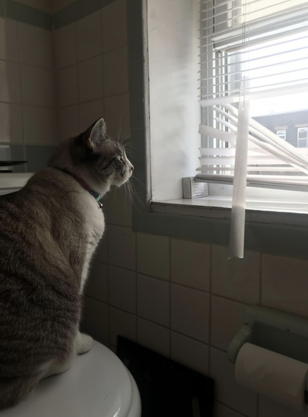 This cat who figured out a costly solution to bird watch: