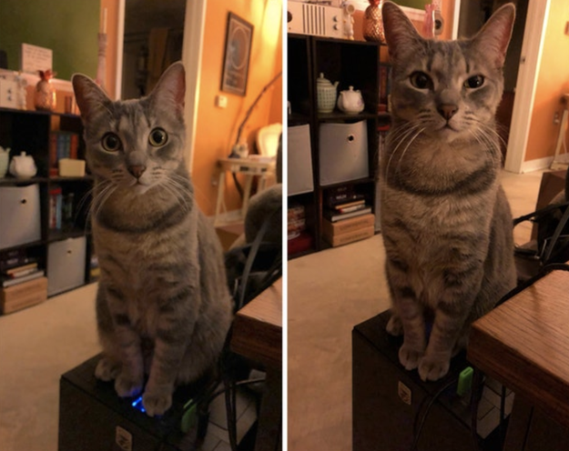This cat who made their owner lose 40 min of work because their computer has an upward facing power button: