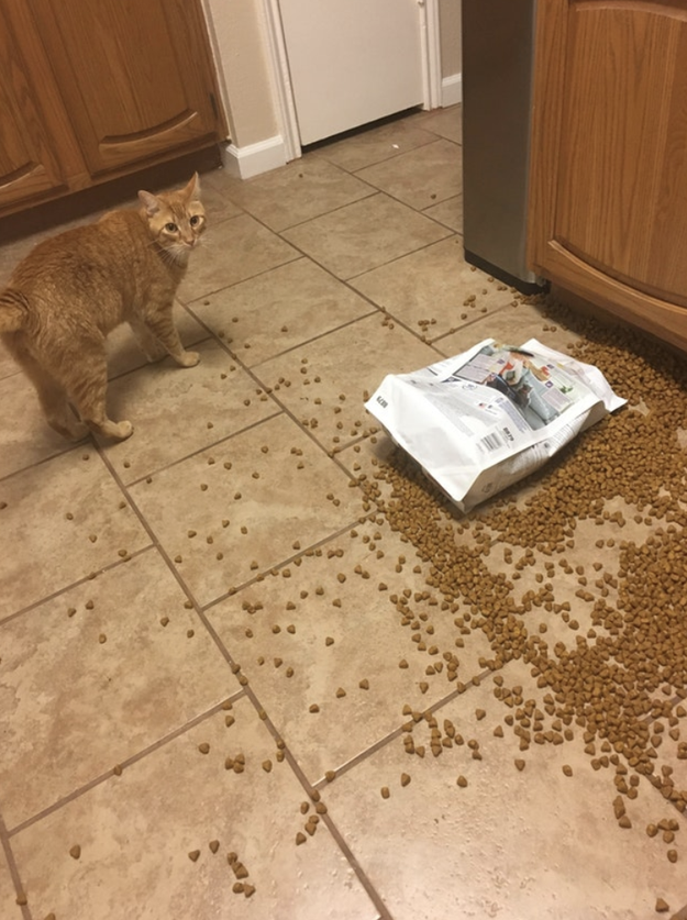 This cat who purposefully dropped all their food and didn't even bother to eat it:
