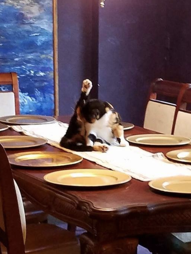 This cat who volunteered to be the centerpiece: