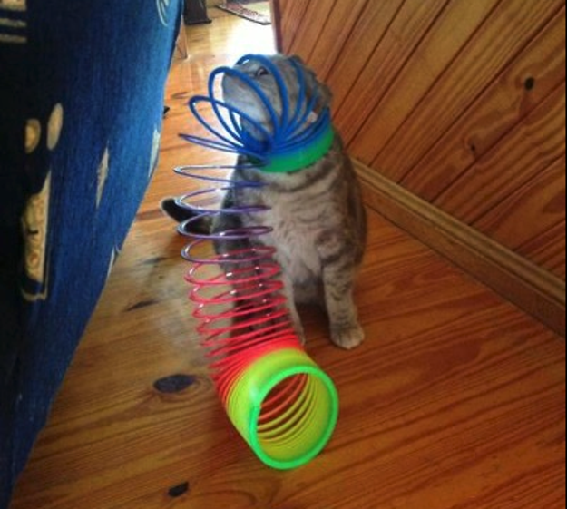 And finally, this silly cat who got their head stuck in a Slinky: