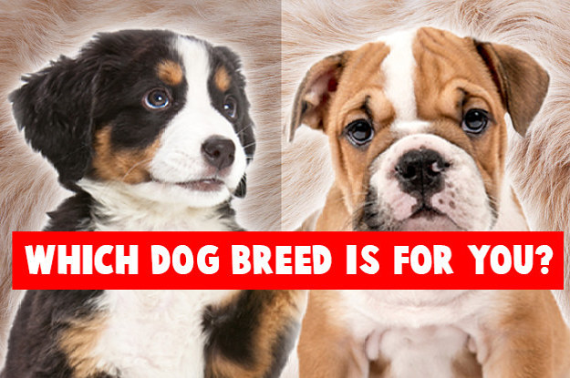 Whats The Best Dog Breed For You?