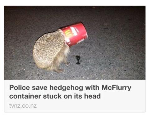 A hedgehog that got a McFlurry stuck on its head: