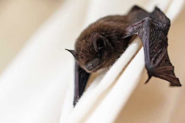 This Couple Tried to Rescue a Rabid Bat, And It Took an International Effort to Track Them Down