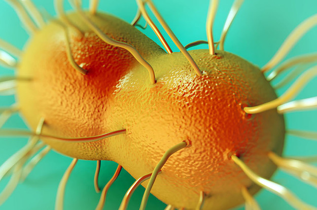 """The Man With """"Super Gonorrhea"""" Was Cured, But Not Everyone In The US Is Getting The Right..."""