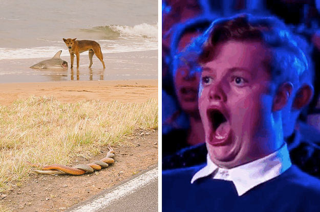 I Can't Believe I Have To Tell You A Photo Of A Dingo Eating A Shark While Two Snakes Have Sex Is Actually...