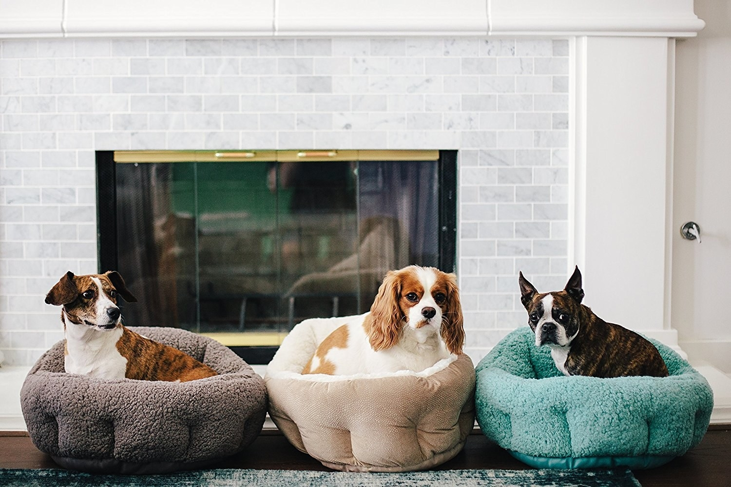 A lifestyle shot of three different medium-to-small dogs sitting in the cushy beds. The sides of the beds come up and hug around each dog as they sit.