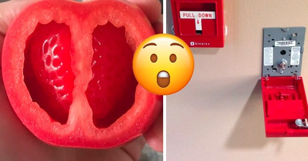 19 Mind-Blowing Pictures That Show You What Random Objects Look Like On The Inside