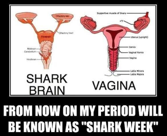 I call it shark week because a uterus looks like a shark brain and women on their period can sometimes be like sharks.—rebeccanelson05–I refer to it as Shark Week, because a) it's bloody and horrifying and b) shark brains look exactly like uteruses. —alexs42167736a