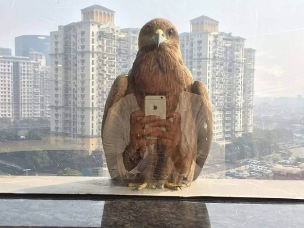 This iPhone-loving eagle.