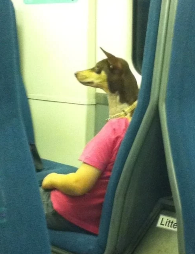 This dog/person spotted on public transportation.