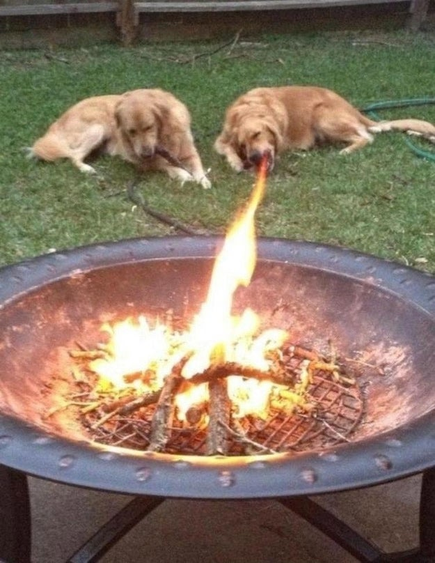 This fire-breathing dog.