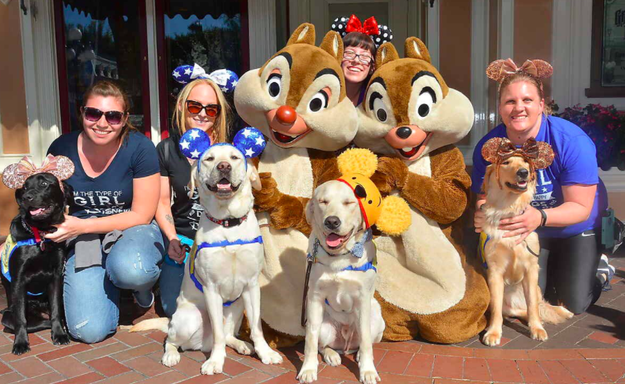 Earlier this week, the Canine Companions for Independence sent four of their service dogs on a field trip to Disneyland and California Adventure.