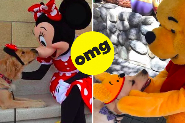 These Service Dogs Went On A Field Trip To Disneyland And My Heart Can't Handle The Photos