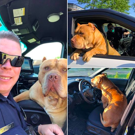 And BETTER YET: After this pure and wholesome photoshoot happened, the police were able to reunite this sweet boy — whose name is Gold (OMG presh!!!) — with his owner thanks to his microchip!!!
