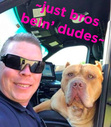 "As for the moral of this story, Officer Frost said: ""Pit bulls have a bit of a bad reputation. While you should always be careful around any dog that you don't know, you shouldn't automatically assume that all pit bulls are bad dogs. They might be really loving like this guy was this morning."""