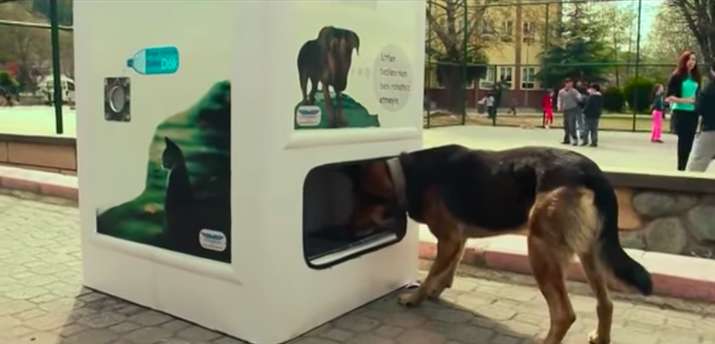 The machines feed the estimated 150,000 stray animals around the city.