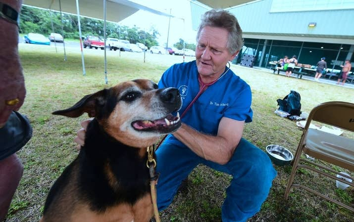 Dr. Tim Richards, a veterinarian on the island and County Councilman checks on evacuee Andrew Linne's dog Scotty at the Pahoa Community Center on May 5.