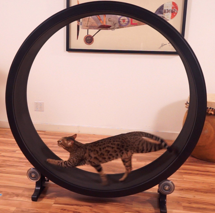 """Promising review: """"Our 9-month-old Bengal started using the wheel regularly after less than a week of training with treats. He is already becoming more relaxed and less demanding of our time! Thanks to the video the cat wheel was easy to assemble and the training videos were very much appreciated."""" —Larry BGet it from One Fast Cat for $199 (available in four colors)."""