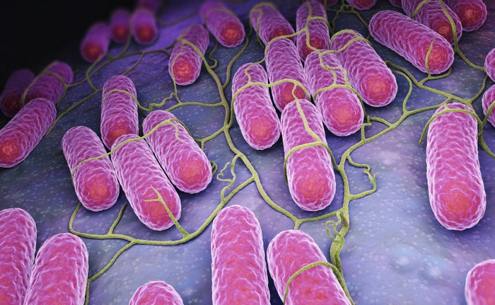 Culture of Salmonella bacteria, 3D illustration.