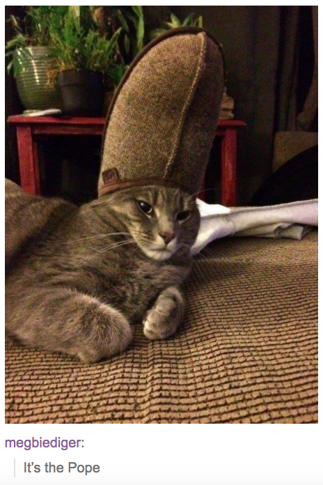 """a cat wearing a slipper on its head with text from tumblr user megbiediger that reads """"it's the pope"""""""
