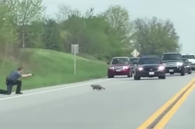 A Sheriff's Deputy Shot And Killed A Groundhog In The Middle Of A Street