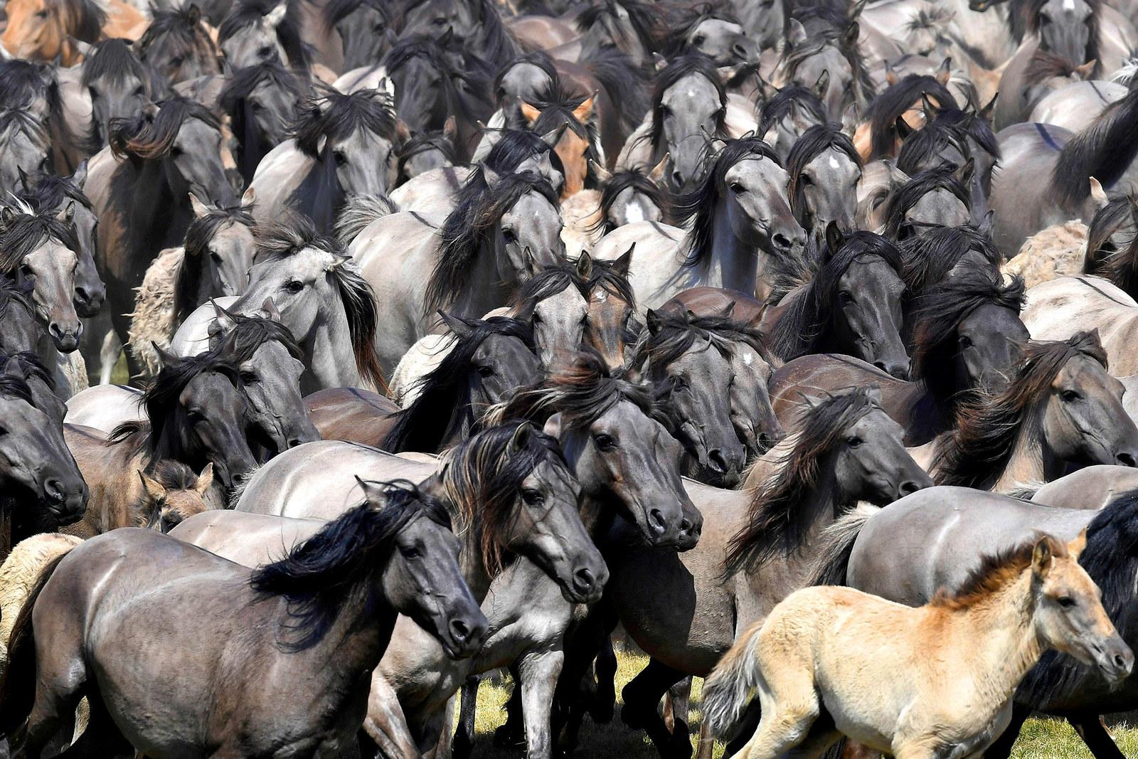 Rabid Horses In Germany! - HD1600×1067