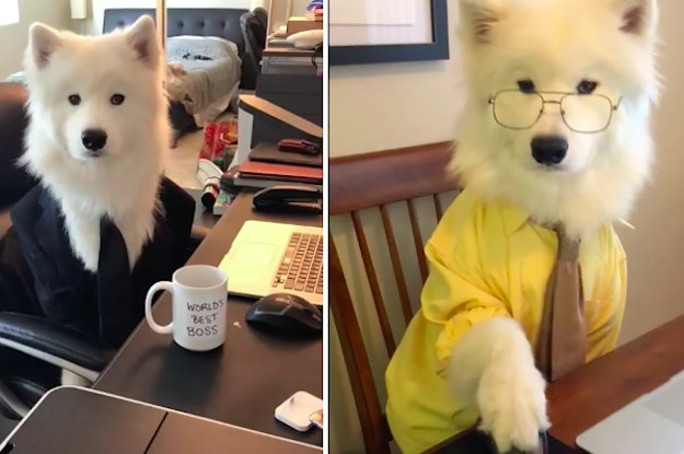"This Woman Re-Created The Opening From ""The Office"" Starring Her Very Good Dog And It Is The Purest Thing On The Internet Today"