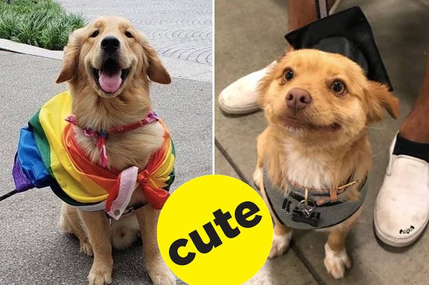 18 Golden Retrievers That Better Get A Ticket Cause They're Going To Hollywood!