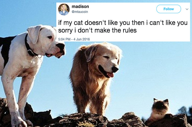 19 Jokes You'll Only Relate To If Your Pet Is 100% Your Child