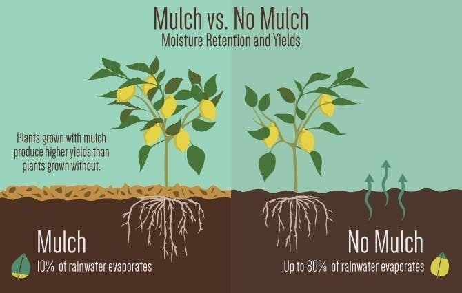 From Fix. Different types of mulch work for different types of gardens of course; read more about what you might need here. You can get mulch at your local garden store, or even use the ChipDrop website/app to bid on mulch cut from local trees.