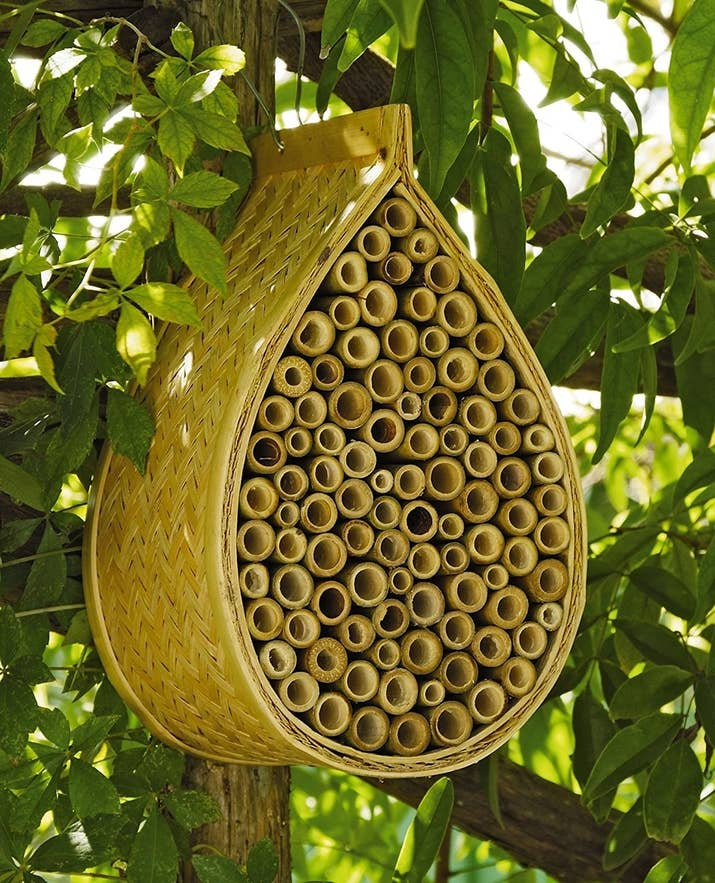 The Honeybee Conservancy has everything you need to know about mason bees. Then you can get a little house for them (each individual tube could be the home of one bee!) on Amazon for $23.91.
