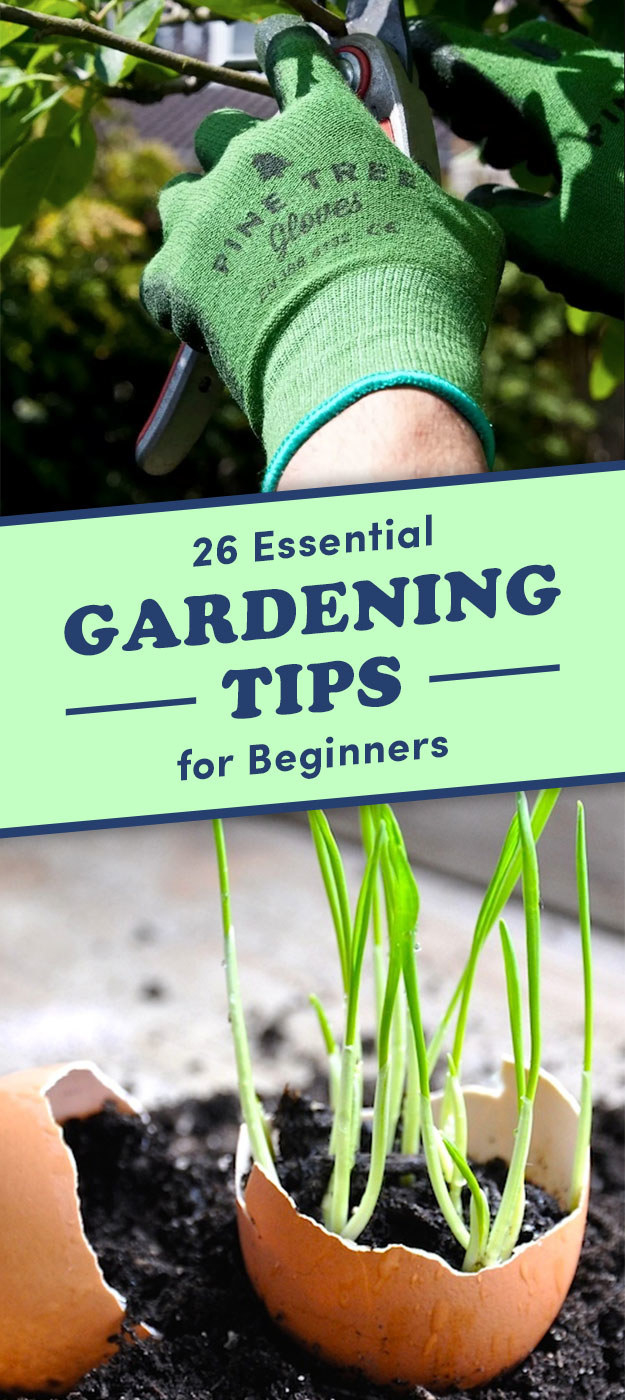 Useful tips for gardeners and gardeners - how to extend the duration of flowering plants in the garden 60