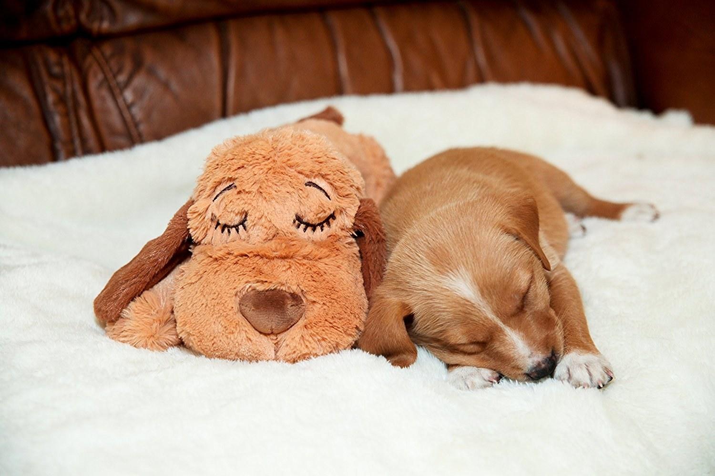 Puppy sleeping beside plush dog toy