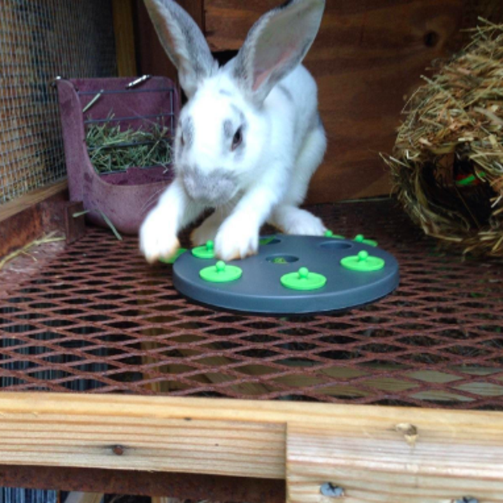 Different rabbit using its hands to shift away the caps on the treat plate