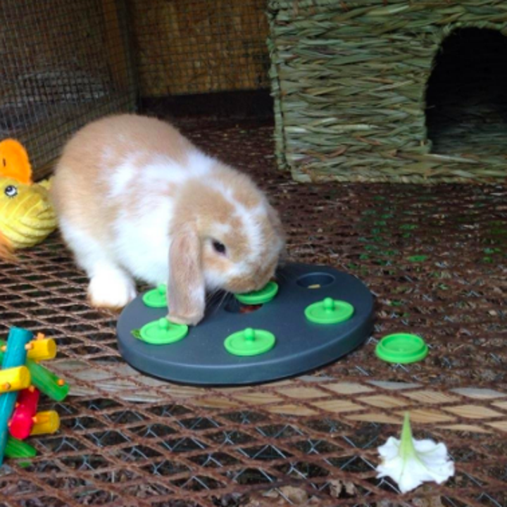 Reviewer's long eared rabbit playing with the treat puzzle by biting the caps in the circular plate