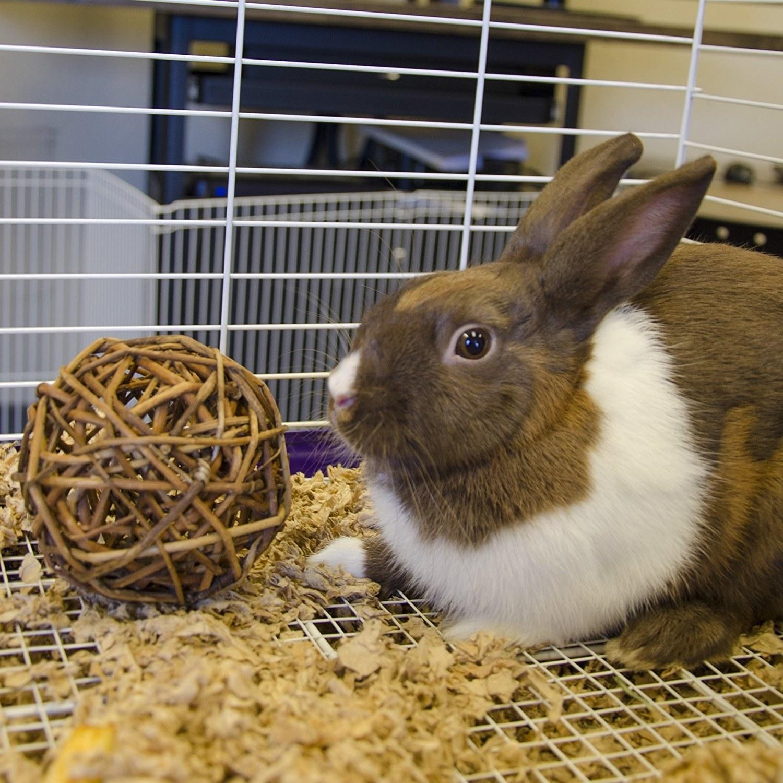 Rabbit beside natural wooden stick ball