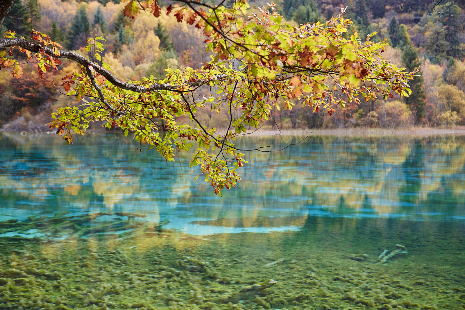 China: Jiuzhaigou Valley National Park -  Jiuzhaigou Valley is known for its multi-colored lakes and waterfalls. The water is so crystal clear, you can see right to the bottom.