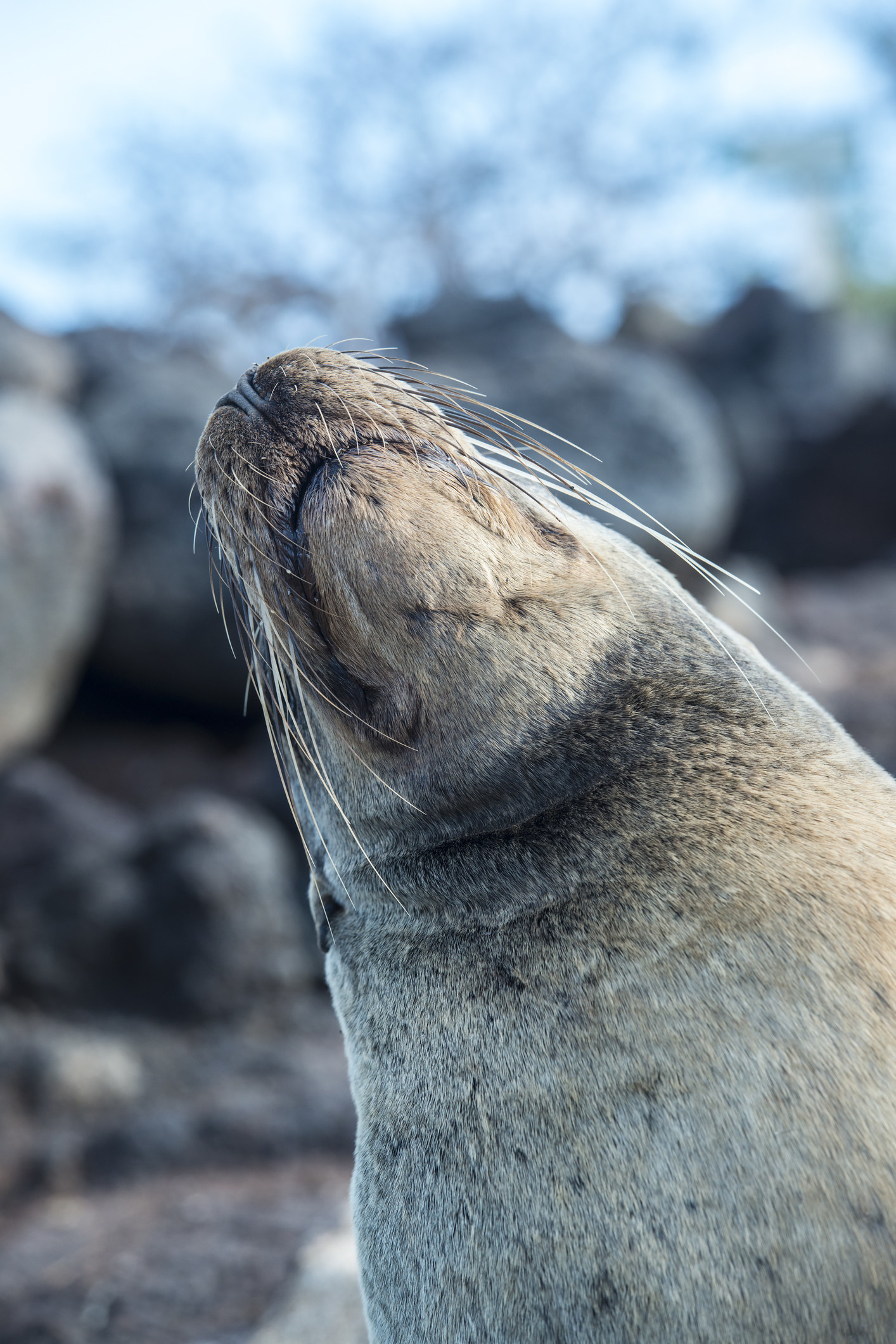 Ecuador: Galápagos National Park -  The volcanic lands that make up the Galapagos Islands are all protected under a single National Park. Blue-footed boobies, penguins, seals, and flamingos are just some of the creatures that call this place home.