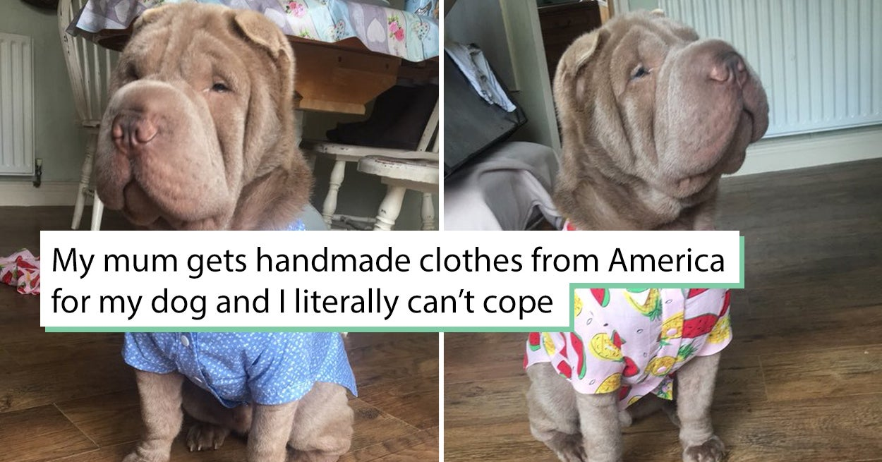 32 Dogs Who Made The First Half Of 2018 A Little More Bearable