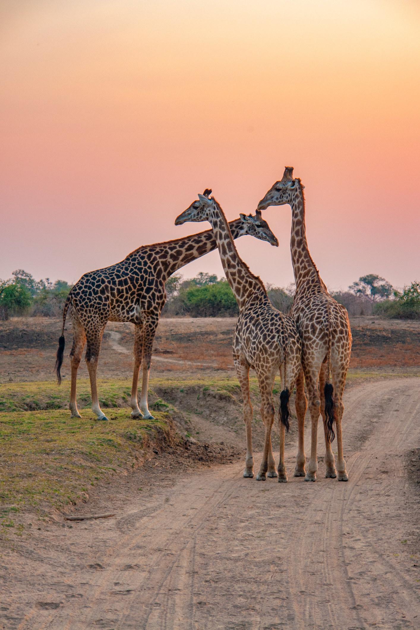 Fußdatierungsstelle Südafrika