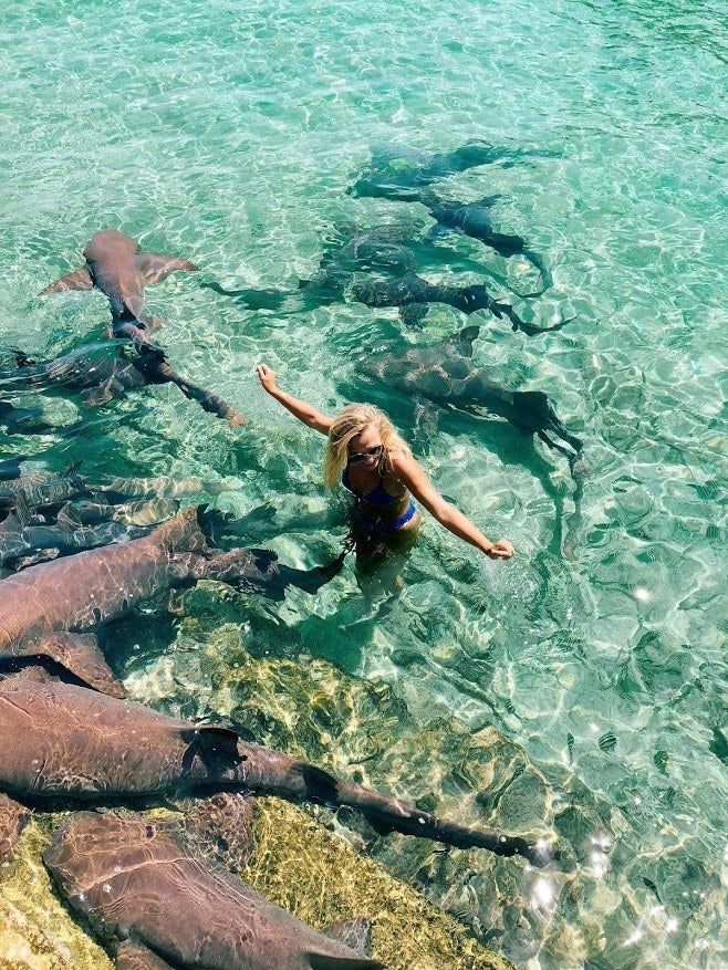 Image result for instagram model claims being bitten by shark was a learning lesson