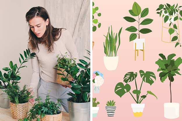 If You've Done 24/35 Of These Things, You've Got A Plant Obsession