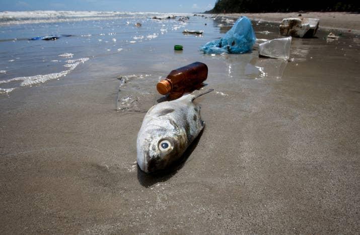 A l'consumir plàstic, si no s'ofeguen a el moment, seus estómacs es tapen i no menjaran més, patint una mort agònica ... això per nomenar una de les tantes tragèdies per la qual poden ser afectats.